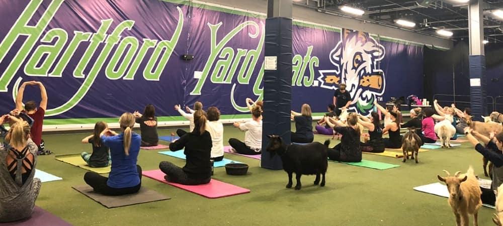 Goat Yoga at Hartford Yard Goats