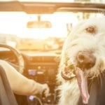 pet friendly used cars
