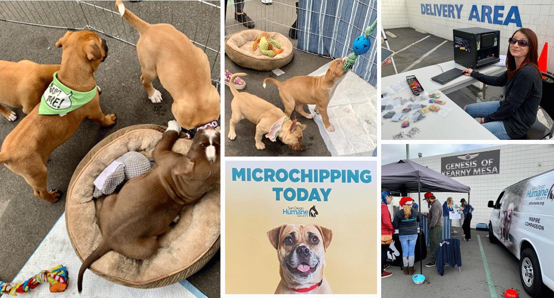 photos from Pet Adoption event at Kearny Mesa Hyundai