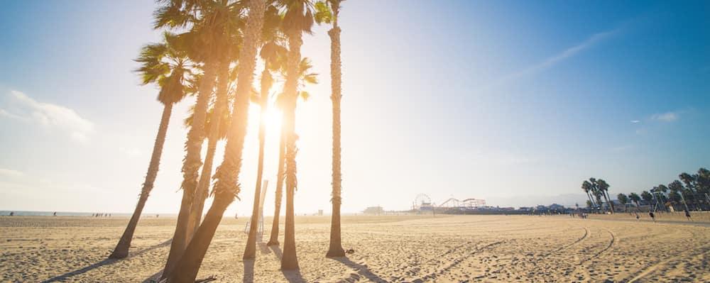 Tropical Beach With Palm Trees In Santa Monica, California